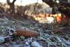 Frost (Patrick Scheuch Photography) Tags: winter hiver frost blaubeuren schwäbischealb swabianalb bawü badenwürttemberg süddeutschland natur nature landscape landschaft bokeh canoneos600d canon freeze cold leav blatt autumn herbst