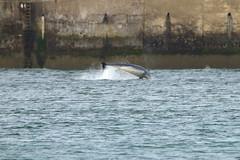 IMG_5743 (monika.carrie) Tags: monikacarrie wildlife scotland aberdeen dolphins dolphin cetacean mammal