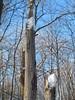 Snow cap trunks (Quevillon) Tags: canada québec laval sainterose boisdeléquerre park tree snow