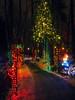 PC110914 (mina_371001) Tags: canada photographywork olympusomdem10 illumination beautiful lafargelake winter outside coquitlam