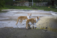 Gatitos / Cats