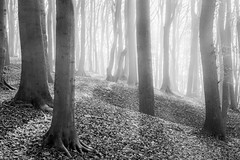 Natural Structures (frank_w_aus_l) Tags: morgenlicht natur light morning monochrome forest haze fog nikkor nikon df nature baumberg ray sw netb noiretblanc nottuln nordrheinwestfalen deutschland de wow