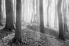 Natural Structures (frank_w_aus_l) Tags: morgenlicht natur light morning monochrome forest haze fog nikkor nikon df nature baumberg ray sw netb noiretblanc nottuln nordrheinwestfalen deutschland de