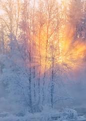 The beginning (L.Matero) Tags: suomi finland kuusa kuusaankoski canon 6d tamron 2470 f28 rapid winter wonderland sunset sunlight sunrays trees explosion frost beautiful light nature