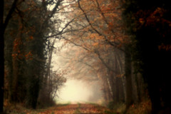 ❤️HSS❤️ (ursulamller900) Tags: autumn autumncolors hss landscape landschaft helios442