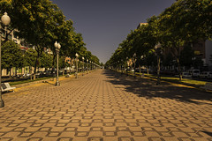 pedestrian walkway.. (ckollias) Tags: day nature nopeople outdoors pedestrian pedestrianstreet pedestrianwalkway road symmetry tree trees