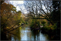 Botanic Gardens (* RICHARD M (Over 5.5 million views)) Tags: botanicgardens southportsbotanicgardens churchtown southport sefton merseyside scapes trees baretrees barebranches winter january reflections idyllic peaceful birds nature mothernature peaceandquiet parkland parks publickparks woodland serenity