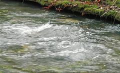 The_Boils_1/25sec (McConnell Springs) Tags: mcconnellspringspark lexingtonky spring water artesianspring mcconnellsprings