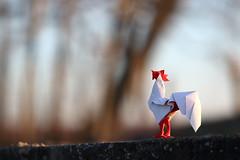 Rooster ( origami ) (Adri 79) Tags: adrianodavanzo adri79 canon7dmarkii samyang135mmf2edumc rooster miwu origami paper