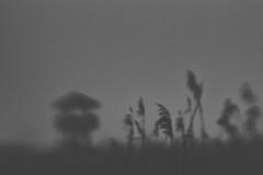 nebelherz. (sommerpfuetze) Tags: bw mono peenetal sw nature schilf winter aussichtsturm blackwhite anklamerstadtbruch vorpommern lensbaby schwarzweis reed natur nebel fog jahreszeiten naturparkpeenetal