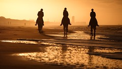 Eighteen legs & more (Drummerdelight) Tags: shillouettes horses intothelight gentlegiants beach eveninglight sunsetting sunset into sun sunlight sunlightset