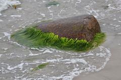 Rock Stein (...der_holger) Tags: rügen strand ostsee 2016 juni campingplatz drewoldke stein