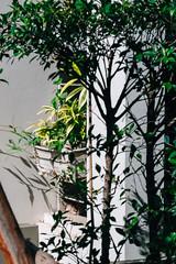 Pulbic Facility Napping on a Resident's Plantful Balcony (norsez) Tags: 40mm apsc cmos fujifilm raw xpro1 xtrans cat classic cute fastlens feline fuji fujixpro1 fujifilmxpro1 kitten kitty lens manualfocus meow mouser neko nokton pussy tom voightlander xp1 vsco mirrorless lightroom art colorful beautiful light vscofilm life fujifilmcamera