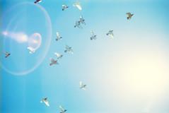 fleeting (itawtitaw) Tags: above blue light summer sky sun color film nature sunshine birds analog 50mm flying haze glow fuji bright halo bluesky olympus scan lookup clear lensflare gradient tenerife epson 135 c41 om2n v700 fujipro400h fzuikoautos50mm18