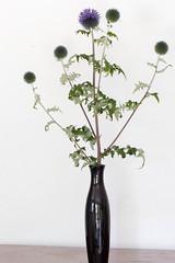 Globe Thistle (Annette - A Simple Breath) Tags: flowers poem globethistle languageofflowers floralpoetry violetsvine