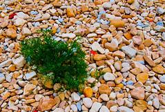 Piedras (Jorge Rodriguez) Tags: espaa playa