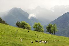 En el camino de Arres. VAL d'ARAN. SPAIN. (MARIANO GARCIA (Pr'amor f/11)) Tags: mountains landscape village meadows aran pirineos valdaran forcanada arres montcorbison