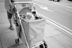 (rcalow.photography) Tags: dog fuji kodak streetphotography hc110 outoffocus lincolnshire contax lincoln neopan 100 t2 acros contaxt2 sonnar carlzeiss epsonv600