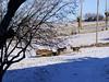 -12°C le matin (Grand-Pappà...) Tags: chèvre cabras chabre margeride marjarida massifcentral goats neige nieve nèu hauteloire hautesterres hiver ferme farm snow winter