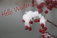 Hello Winter (CCphotoworks) Tags: festive holidays christmas message cards pretty snowcovered winterberries redberries berries greetings