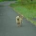 Really Wild Street Dog