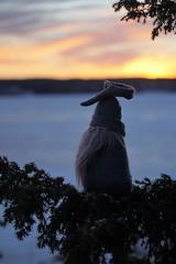 tomten spanar över havet (aggeji) Tags: fs170115 tomte fotosondag santa outdoor sea sunset