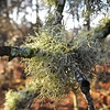 Natural decoration (jpparadise242) Tags: branch woods forest trees tree lichens lichen hampshire newforest