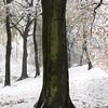 Tree (jasontheaker) Tags: tree beech winter forest otley westyorkshire uk snow