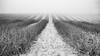The fog lifted (Alex.Fremer) Tags: mist landscape fog morning snow haze row
