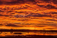 Sunrise at Bosque del Apache (Mick Thompson1) Tags: sunrise bosquedelapache