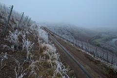Saar winter 1 (Denkrahm) Tags: denkrahm saar vineyards winter schleife wiltingen kanzem