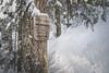 Alpine Lake Wilderness (johnwporter) Tags: hiking scramble snowshoe cascades mountains nationalforest mtbakersnoqualmienationalforest prattmountain pnw upperleftusa northwestisbest 徒步 爬行 雪鞋行 喀斯喀特山脈 山 國家森林 貝克山史諾夸米國家森林 普瑞特山 太平洋西北部 美國左上角 西北部最好 alpinelakes wilderness alpinelakeswilderness 高山湖泊 荒野 高山湖泊荒野區 atx116prodx tokinaaf1116mmf28 wideangle wideanglelens 廣角 廣角鏡