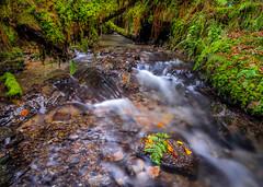 The River at Postywood. (hemlockwood1) Tags: trees woodland river preseli ancient pembrokeshire rock