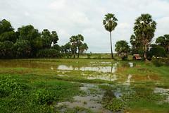 Cambodian Farming
