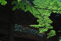 鎌倉・妙本寺 ∣ Myohonji temple・Kamakura [EXPLORED] (Iyhon Chiu) Tags: 妙本寺 myohonji temple 鎌倉 kamakura 建築 日本 寺院 鎌倉市 japan japanese 2016