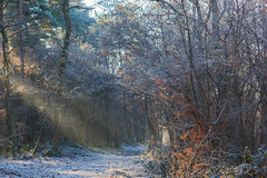 Winter / Hiver (tribsa2) Tags: winter hiver marculescueugendreamsoflightportal forest foret bos