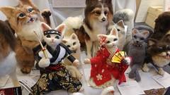 Chat ninja et chatte geisha (So_P) Tags: paris japan cat chat doll expo ninja geisha katze laine 2015 feutre