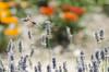 DSC_0009 (Turennia) Tags: naturaleza nature d50 nikon bichos jardín barakaldo photooftheday botánico libélulas pickoftheday apareamiento nikonflickraward