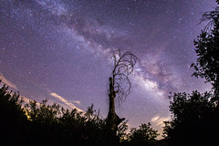 The Milky Way and a Spooky Tree (slworking2) Tags: california tree us julian unitedstates cuyamaca milkyway cuyamacaranchostatepark pasopicacho