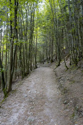 Vers la cascade du Nideck à Oberhaslach