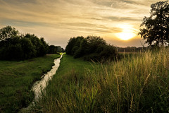 Before sunset (jan.arnds) Tags: trees sunset summer orange sun nature water river landscape sommer gras fluss tones landschaft sonne idyllic warmlight goingdown nikond750 janarnds