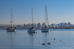 Sail Boats at San Diego Bay (charlestheneedler) Tags: aircraftcarriertheodoreroosevelt cvn71 sandiegobay sandiegoskyline shelterisland theodoreroosevelt