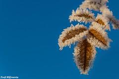 DSC05805 f (Fooß) Tags: laub blatt frost winter himmel blau leaves flickrchallengewinner
