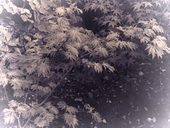 IMG_0261 (starst0rm*<(*?*)>*) Tags: acers trees china