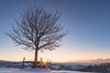 Tree - Langnau (Captures.ch) Tags: 2016 bern black blue brown captures clear emmental forest gray hills home january landscape langnau magenta morning mountains nature orange red sky stockhorn sun sunrise swiss switzerland tree trees white yellow