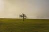 Lonely Tree (Eli°°) Tags: tree