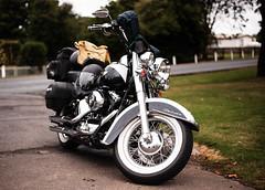 Harley at Waratah Roadhouse, Tasmania (paulledger81) Tags: harley tasmania waratah hog chopper vtwin deluxe