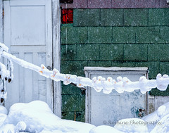 Clothes Pins on a Line (Roshine Photography) Tags: comoxvalley cumberland environmental snow clothespins door shingles textures winter