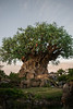 Tree of Life (Liz Marko Photography) Tags: red disney world parks disneys animal kingdom dak discovery island tree life animals carvings icon travel vacation family fun color