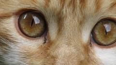 Coffee (나탈리아) Tags: gato café coffee ojos eyes mascota compañia